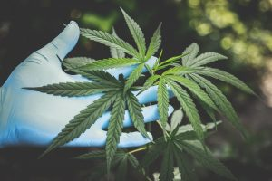 Does CBD Actually Have Benefits? The Science and Research.