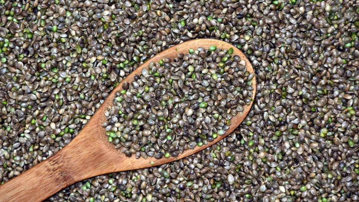A Guide to Buying Quality Cannabis Seeds to Grow at Home